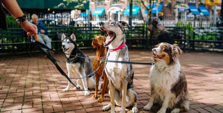 Dog Sports and Fitness Conditioning