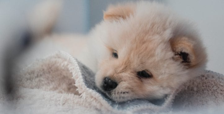 All things puppy, get started right
